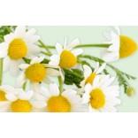 Herbs - Chamomile